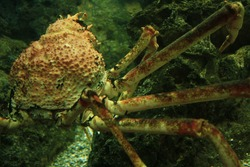 Crustacean Half Body with Legs