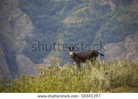 crying donkey in mountains