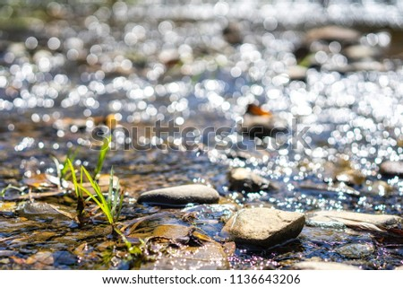 Crystal clear water flowing over rocks in a streams. Streams in the forest. Nature background. select focus and blurred background.