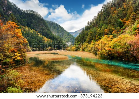 Crystal clear water of river among fall woods in mountain gorge, Jiuzhaigou nature reserve (Jiuzhai Valley National Park), China. Autumn landscape with forest in the Min Mountains (Minshan).