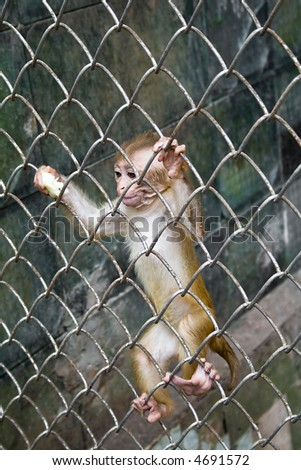 Cub of the monkey in a cage
