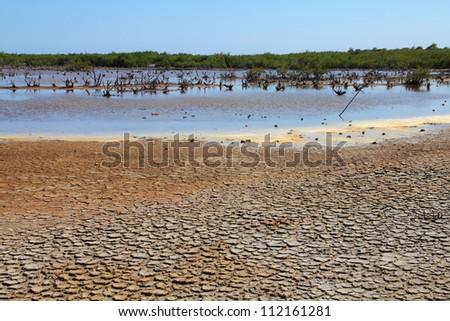 Cuba - Ancon peninsula. Dry soil and mangrove wetland area.