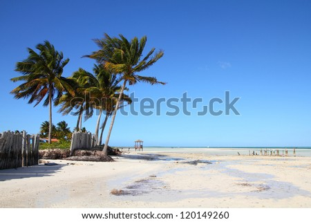 Cuba - Caribbean beach Cayo Guillermo. Sandy coast and coconut palm trees. Jardines del Rey region.