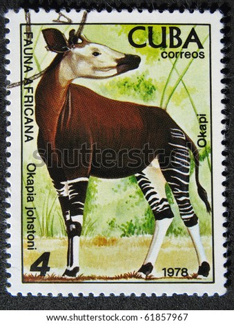CUBA - CIRCA 1978: A stamp printed by Cuba shows  fauna Africa  the Okapi- Okapia johnstoni, stamp is from the series, circa 1978
