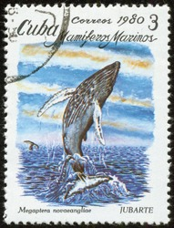 CUBA - CIRCA 1980: A stamp printed by Cuban Post is from the series Sea Mammals. It shows the humpback whale (Megaptera Novaeangliae), circa 1980