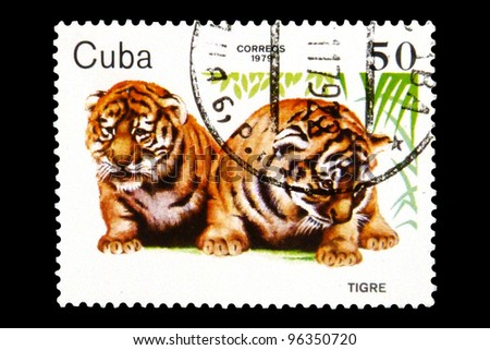 "CUBA - CIRCA 1979 A stamp printed in Cuba shows Two young Animals with the inscription ""Tiger cubs"", from the series ""Young Zoo Animals"", circa 1979"