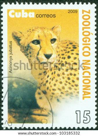 CUBA-CIRCA 2009: A stamp printed in the Cuba shows a leopard , circa 2009