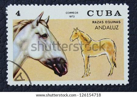 CUBA - CIRCA 1972: A stamp printed in the Cuba, shows horse, circa 1972
