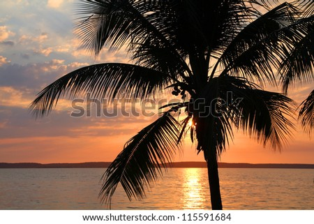 Cuba - coconut palm trees and sunset in Cienfuegos