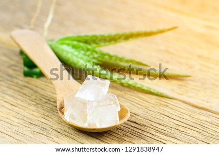 Cube Aloe Vera gel in wood spoon.Aloe Vera (Aloe barbadensis Mill.,Star cactus, Aloe, Aloin, Jafferabad or Barbados) a very useful herbal medicine for skin care and hair care. #1291838947
