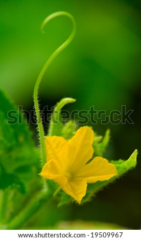 Stock photo cucumber flower with germs as the question mark 19509967