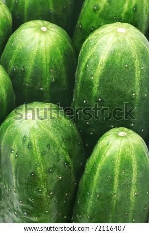 Cucumbers. Close-up of ripe green cucumbers #72116407
