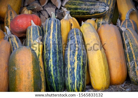 Cucurbita Fruits Background , Certain Varieties of Squash