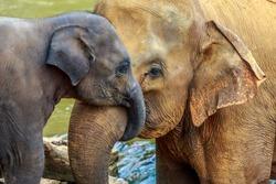 cuddling elephant and baby elephant