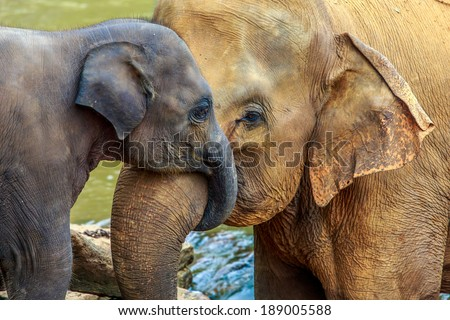 stock photo cuddling elephant and baby elephant 189005588 - Каталог — Фотообои «Животные»