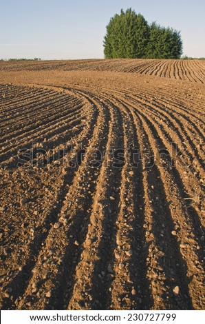 cultivated farm field agriculture landscape #230727799