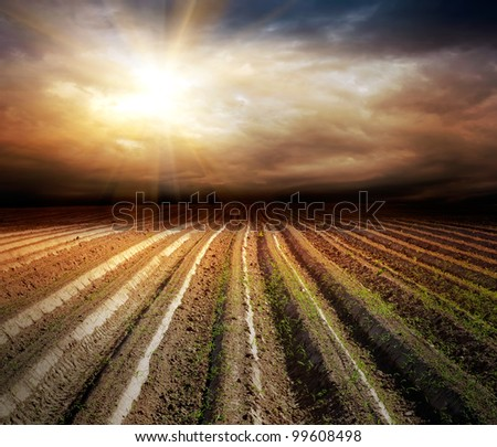 cultivated field over dark stormy sky in summer with young plants starting to grow - stock photo