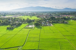 Cultivated land and land plot or land lot. Consist of aerial view of green field, agricultural plant and ridge. That is tract of land for cultivate, owned, sale, development, rent, buy or investment.