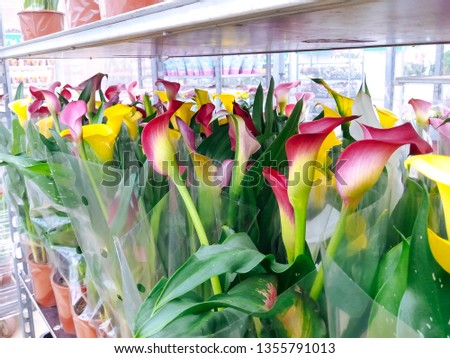 Cultivated ornamental flowers growing in a commercial plactic foil covered horticulture greenhouse #1355791013