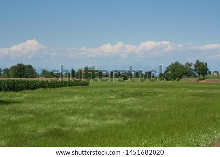cultivation of animal fodder italy #1451682020