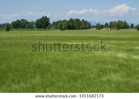 cultivation of animal fodder italy #1451682173
