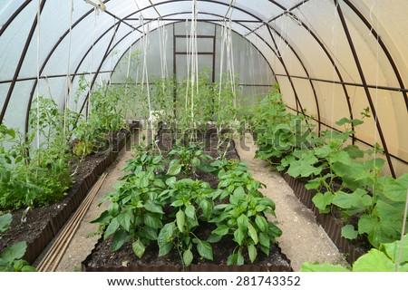 Как вырастить рассаду в теплице из поликарбоната