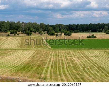 Cultural grass landscape with burial mounds from the viking age. Square symmetric fields. Stones and trees scattered in the scene. Shot in Birka, Sweden, Scandinavia Stock fotó ©