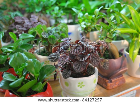 Culture of plants  in flower-pot - stock photo