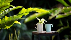 Cup drinking coffee on the chair in the nature green garden.  Work from home for protection virus and environment