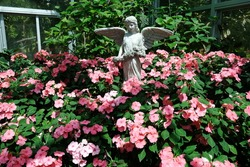 Cupid statue and red flower