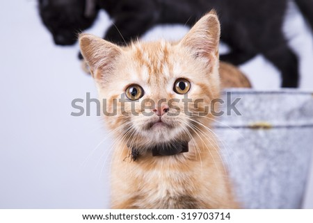 Curious Cat #319703714
