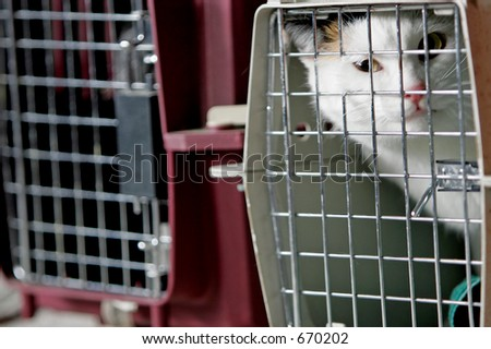 Curious cat and two crates or cages.