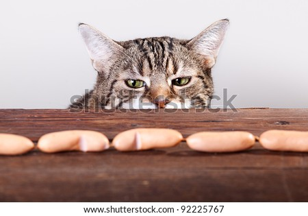Curious Cat being tempted by sausages on table