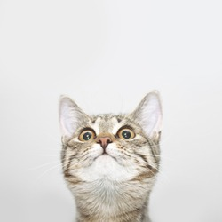 Curious cat face looking up. Cute kitten portrait