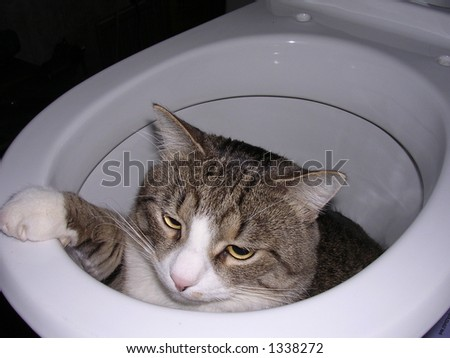 Curious cat has got into a toilet during repair
