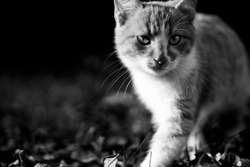 Curious cat in black and white