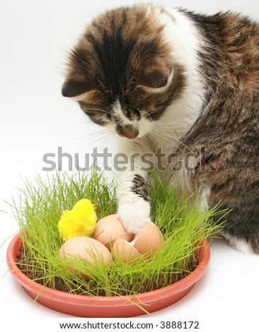 Curious cat looking eggs
