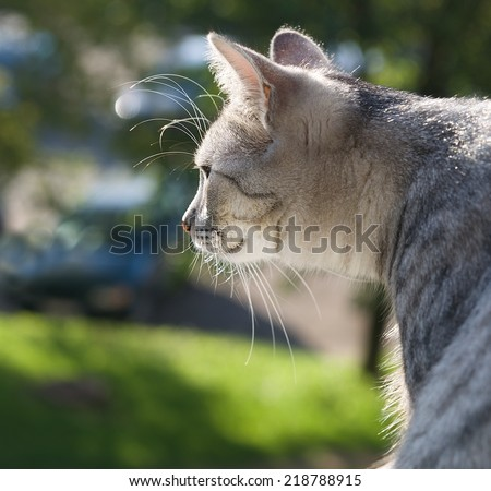Curious cat sitting and looking through the window on a green autumn background, watching cat close up, cat looking left, Cat portrait close up, only head crop, cat in green background,cat head