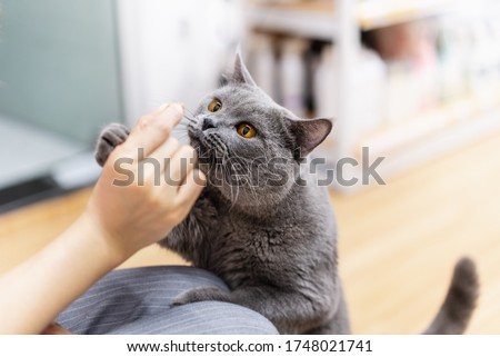 Curious cat smell snack on its master's hand
