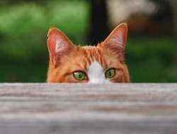 Curious Cat with green eyes