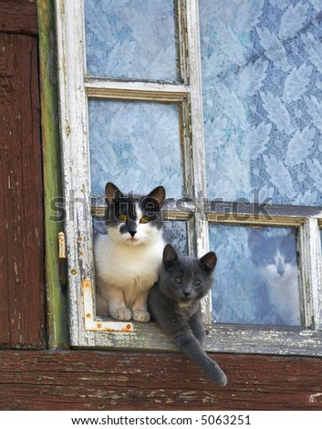 curious cats by a window