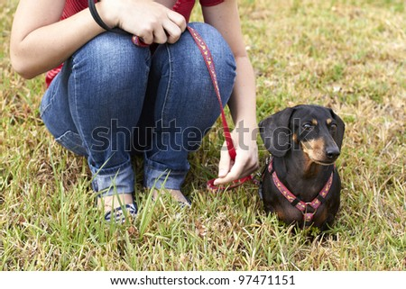 Curious Dachshund dog and owner