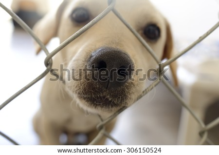 Curious dog nose fence is a cute dog poking his nose through the hole in the fence.