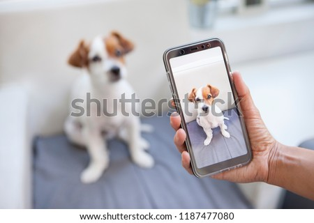 curious dog on a screen phone