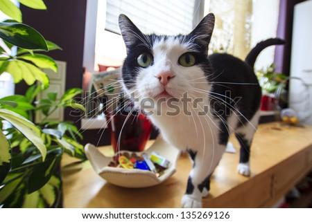 Curious funny tabby cat