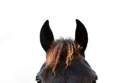 curious horse ears