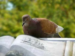 Curious pigeon decided to try the taste of science