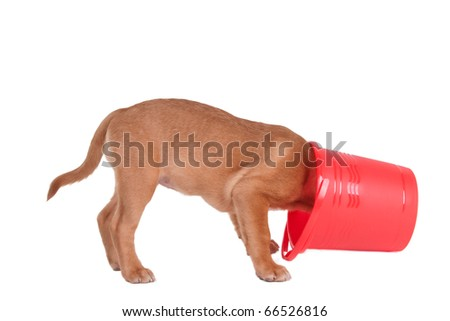 Curious Puppy Hiding in Bucket, Isolated