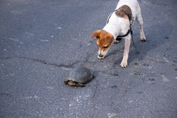Curious puppy looking at a turtle