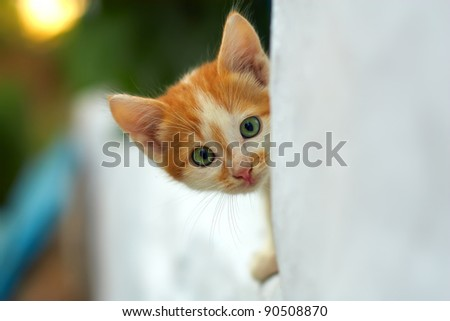 curious small red kitten with beautiful green eyes peeking out from white wall. outdoors